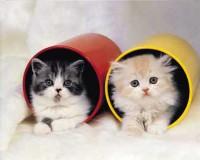 """Животные. """"Два котенка в целиндрах"""" (алюм), размер 20х25 - ДЕКАРТ - настоящая багетная мастерская на Московской!"""