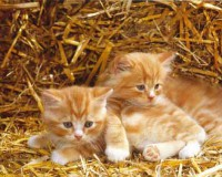 "Животные. ""Два котенка на сене"", размер 20х25 - ДЕКАРТ - настоящая багетная мастерская на Московской!"